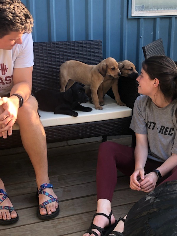 Several puppies standing on a bench outside